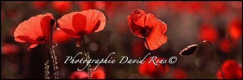 Photographe - Photographe-Auteur David Reus© - photo 18