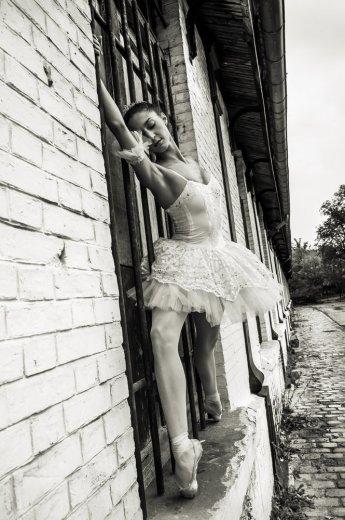 Photographe - David Elofer Photographe © - photo 63