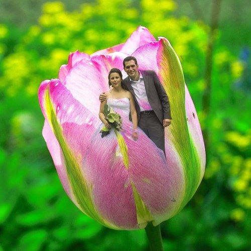 Photographe mariage - Studio Willy Proust - photo 12