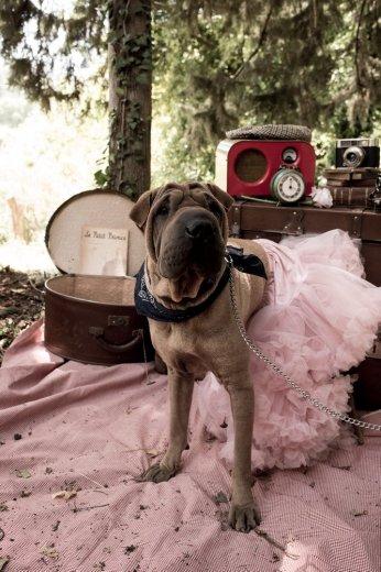 Photographe mariage - christelartphotograhy - photo 77