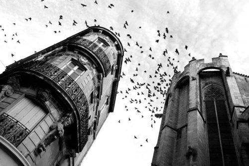 Photographe - Sylvain Mestre - photo 44