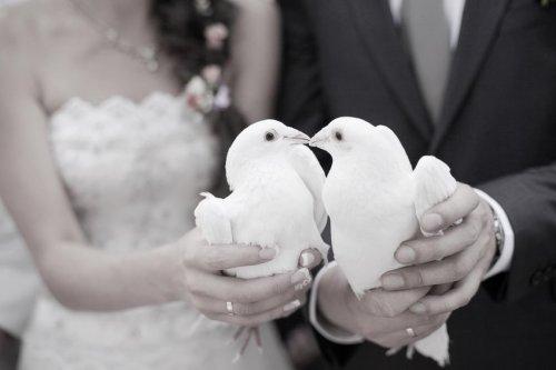 Photographe mariage - franck guerin - photo 14