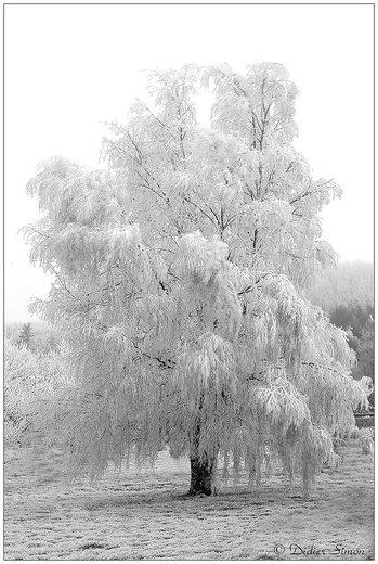 Photographe - Didier SIMON   Photographe - photo 32