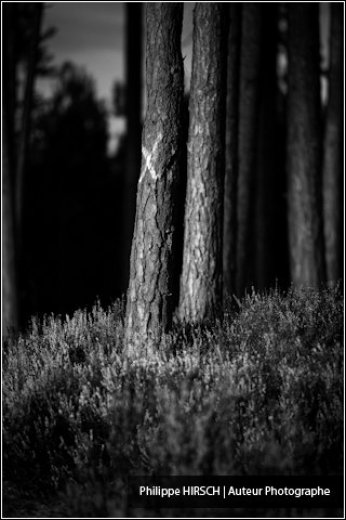 Photographe mariage - Philippe HIRSCH ⎢ Photographe - photo 35