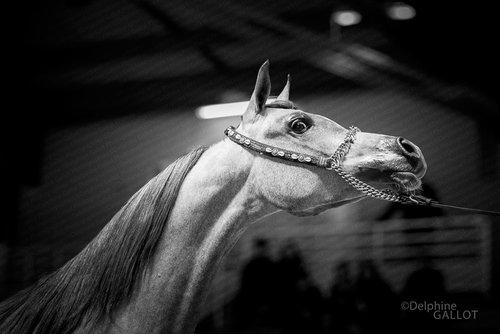 Photographe - Delphine Gallot - Photographe - photo 7