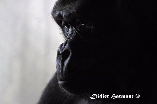 Photographe - HARMANT Didier - photo 18