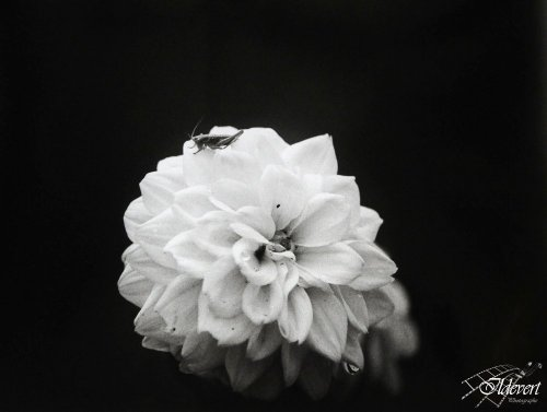 Photographe mariage - Ildevert atelier photo - photo 90