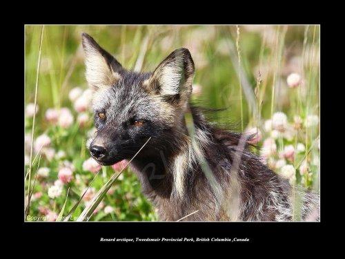 Photographe - LACROIX - photo 7