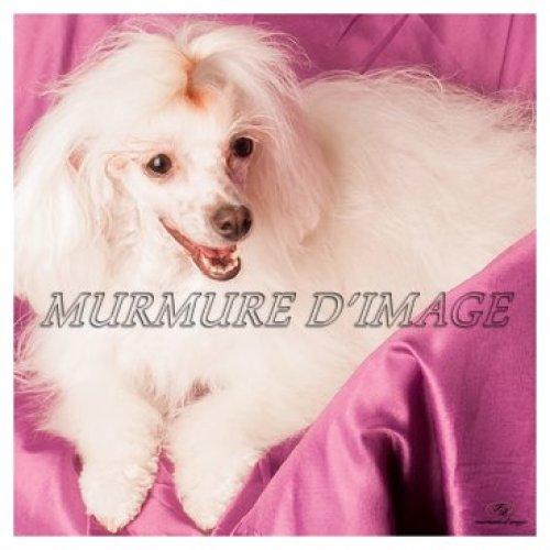 Photographe mariage - FB. murmure d'image  - photo 51