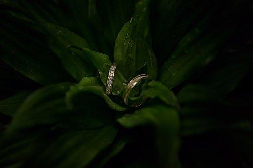 Photographe mariage - LACLEF Laurent - photo 34