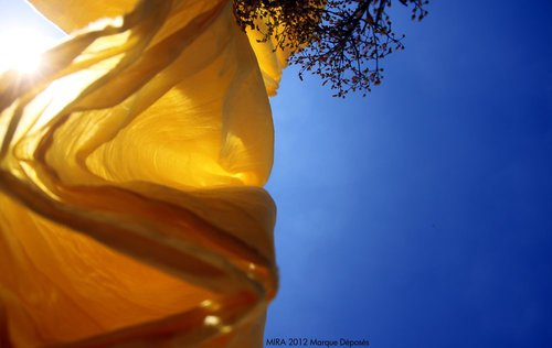 Photographe - Samera tamjounti - photo 69