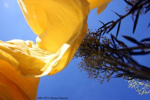Photographe - Samera tamjounti - photo 70