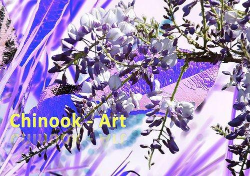 Photographe - Chinook-Art - photo 25