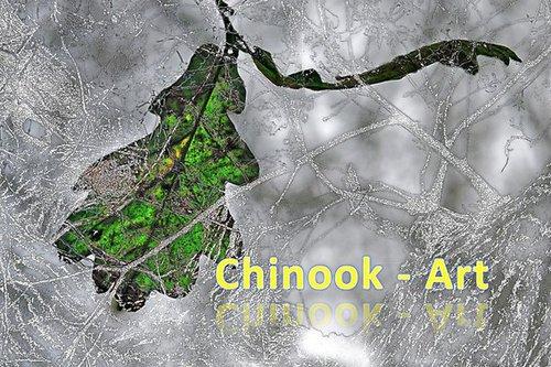 Photographe - Chinook-Art - photo 16