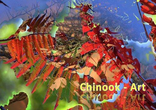 Photographe - Chinook-Art - photo 33
