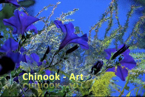 Photographe - Chinook-Art - photo 4