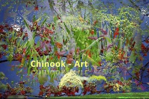 Photographe - Chinook-Art - photo 67