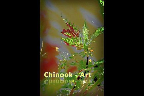 Photographe - Chinook-Art - photo 68