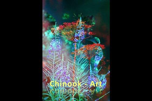Photographe - Chinook-Art - photo 49