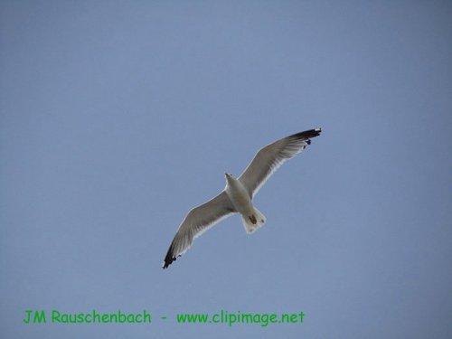 Photographe - JM Rauschenbach - photo 3