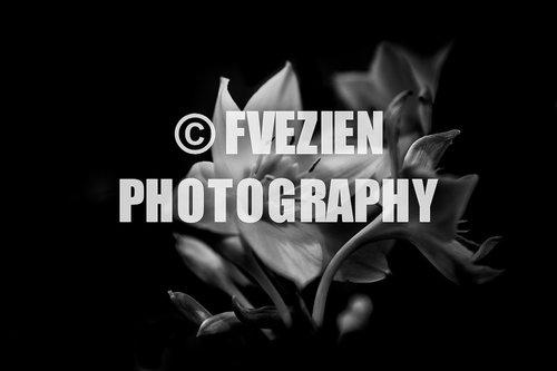 Photographe mariage - François Vézien Photography - photo 57