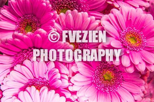 Photographe mariage - François Vézien Photography - photo 28