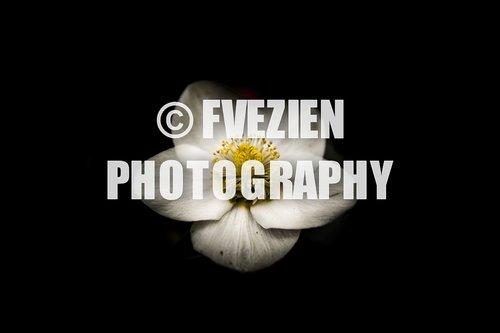 Photographe mariage - François Vézien Photography - photo 54