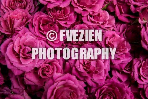 Photographe mariage - François Vézien Photography - photo 11