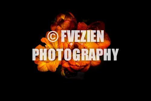 Photographe mariage - François Vézien Photography - photo 12