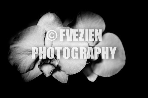 Photographe mariage - François Vézien Photography - photo 35
