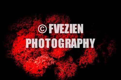 Photographe mariage - François Vézien Photography - photo 22