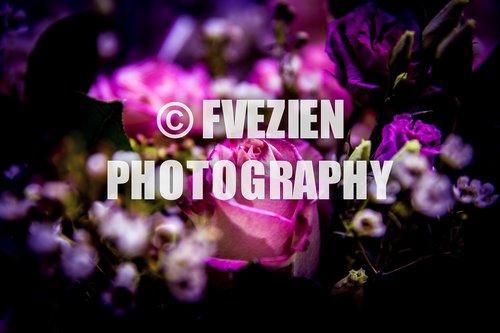 Photographe mariage - François Vézien Photography - photo 46