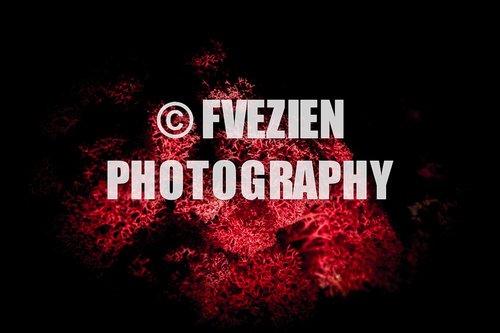 Photographe mariage - François Vézien Photography - photo 21