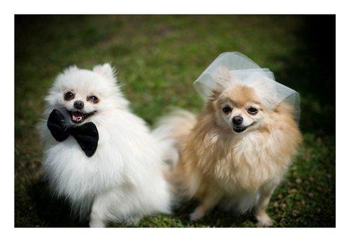 Photographe mariage - Zilia Photographie - photo 37
