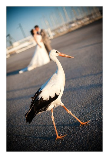 Photographe mariage - Zilia Photographie - photo 4