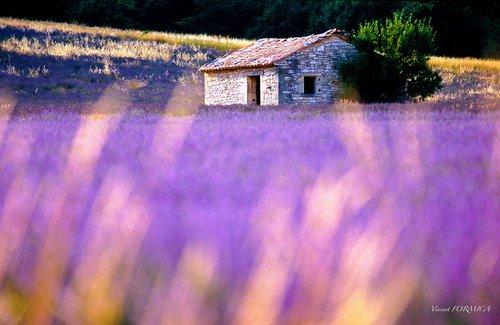 Photographe - Vincent FORMICA Photographe  - photo 10