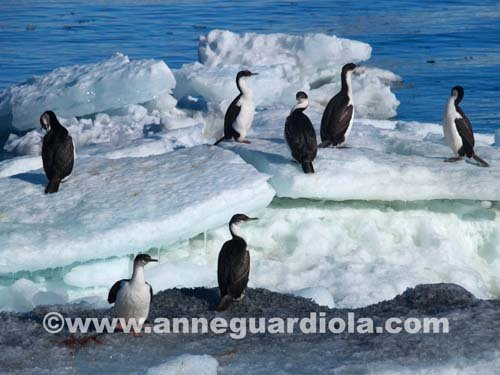 Photographe - ANNE GUARDIOLA - photo 3