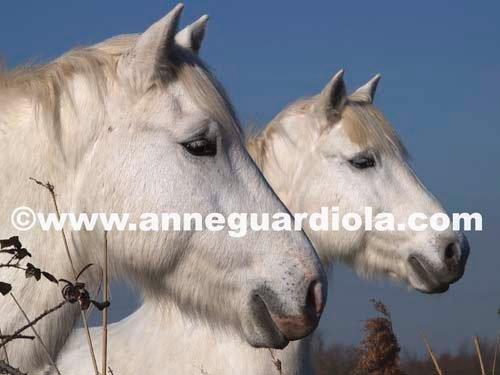 Photographe - ANNE GUARDIOLA - photo 20