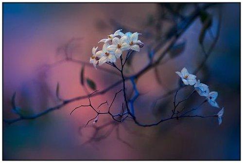 Photographe mariage - Provence Photo - photo 45