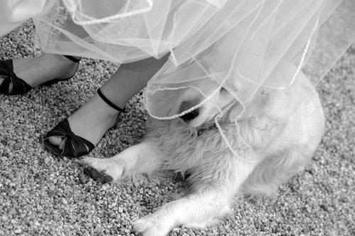 Photographe mariage - Yann Richard Photographe - photo 150