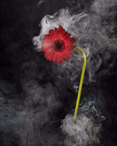 Photographe - Tchaikovski Artem - photo 8