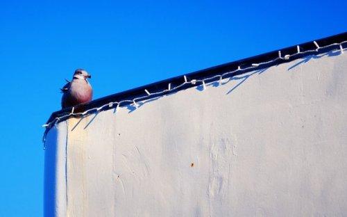 Photographe - CIESLA ARTES - PHOTO - photo 14